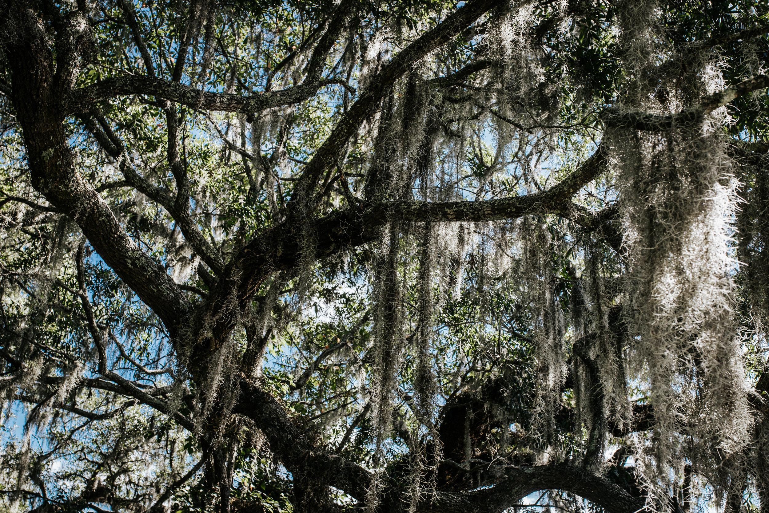 Charleston.Trip.TheStirewalts.2017-21.jpg