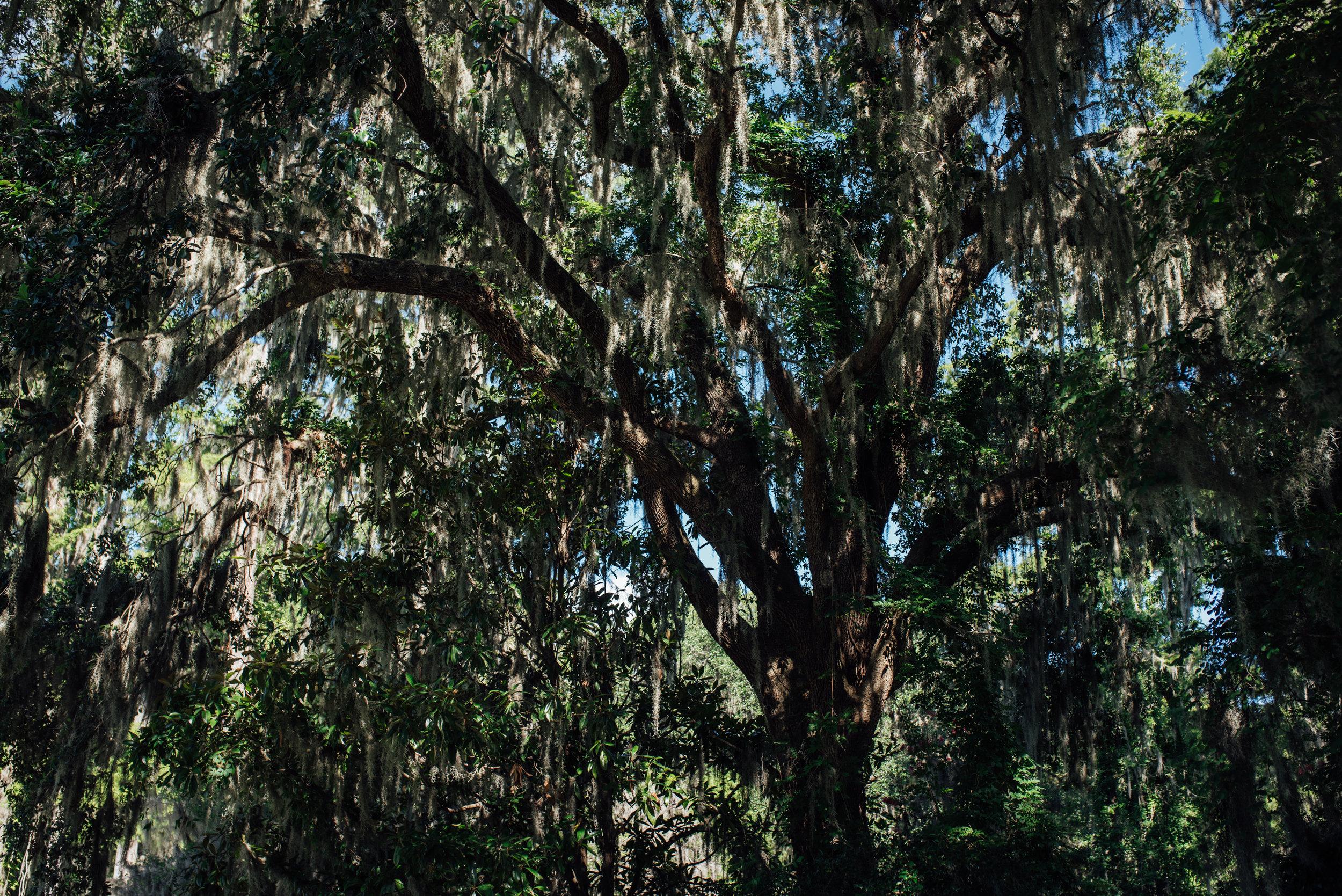 Charleston.Trip.TheStirewalts.2017-33.jpg