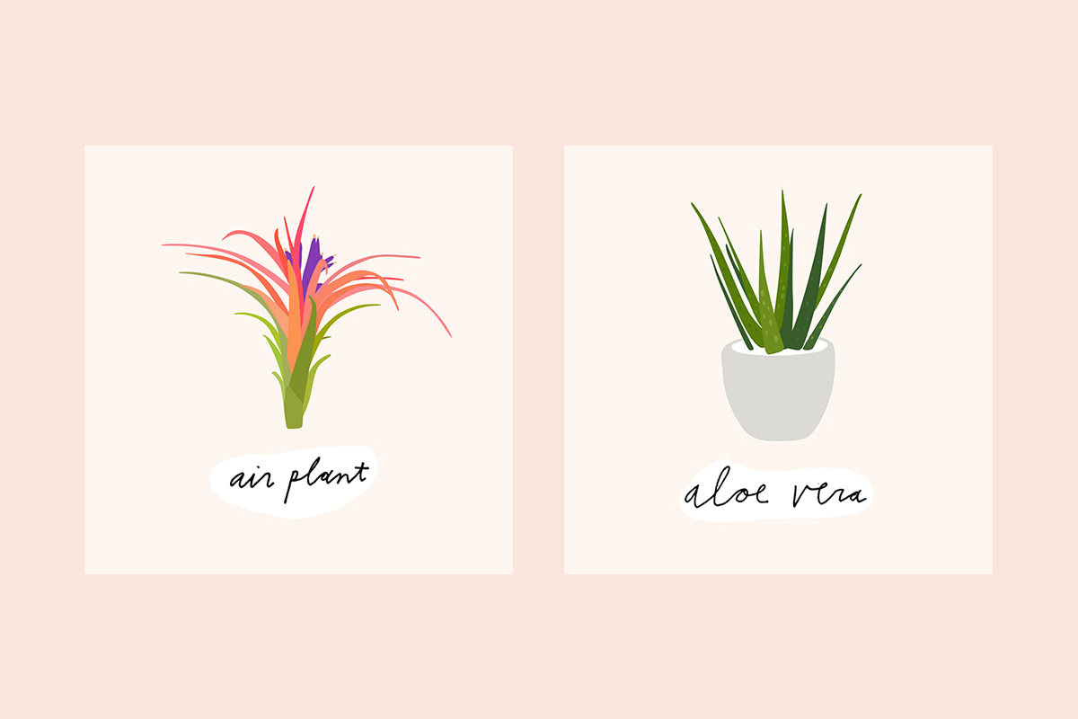 9-House-Plants_1.jpg