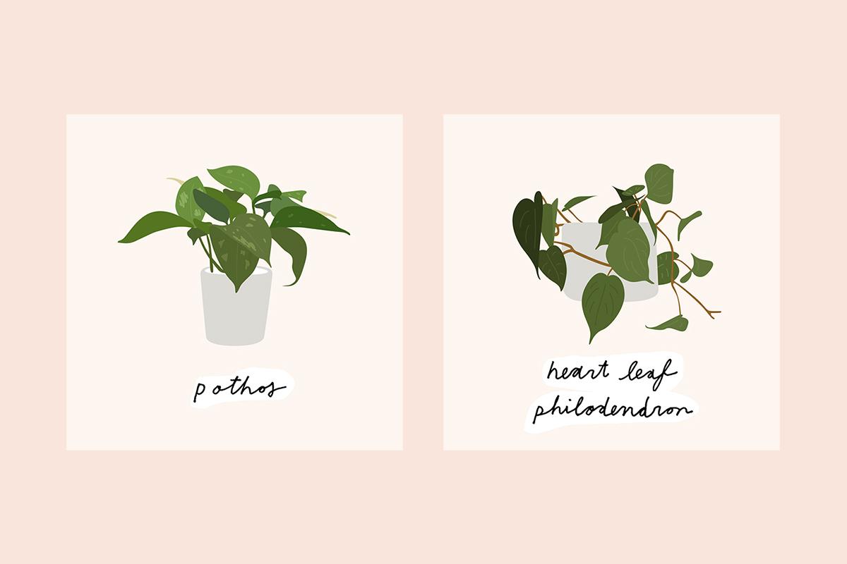 9-House-Plants_4.jpg