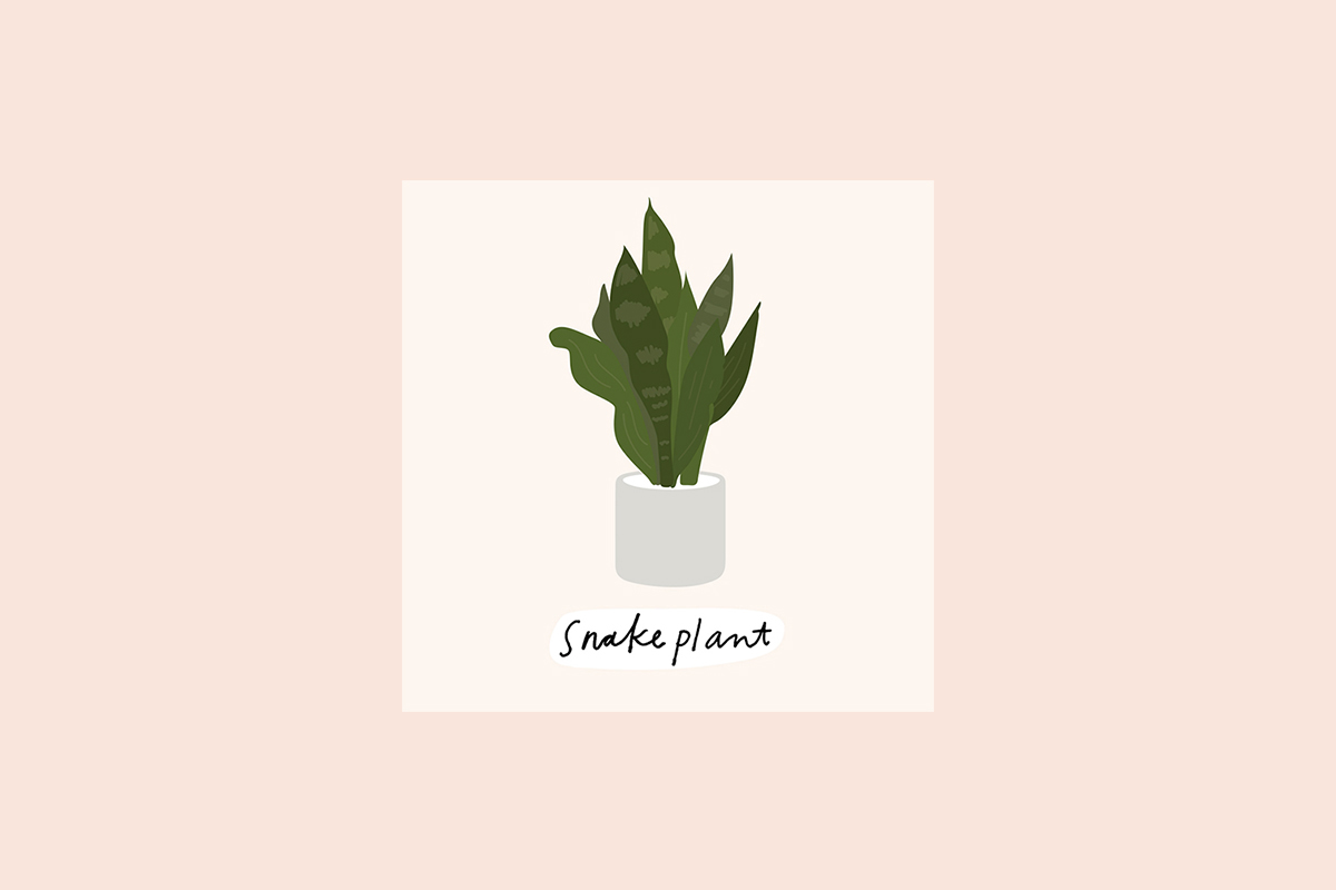 9-House-Plants_5.jpg