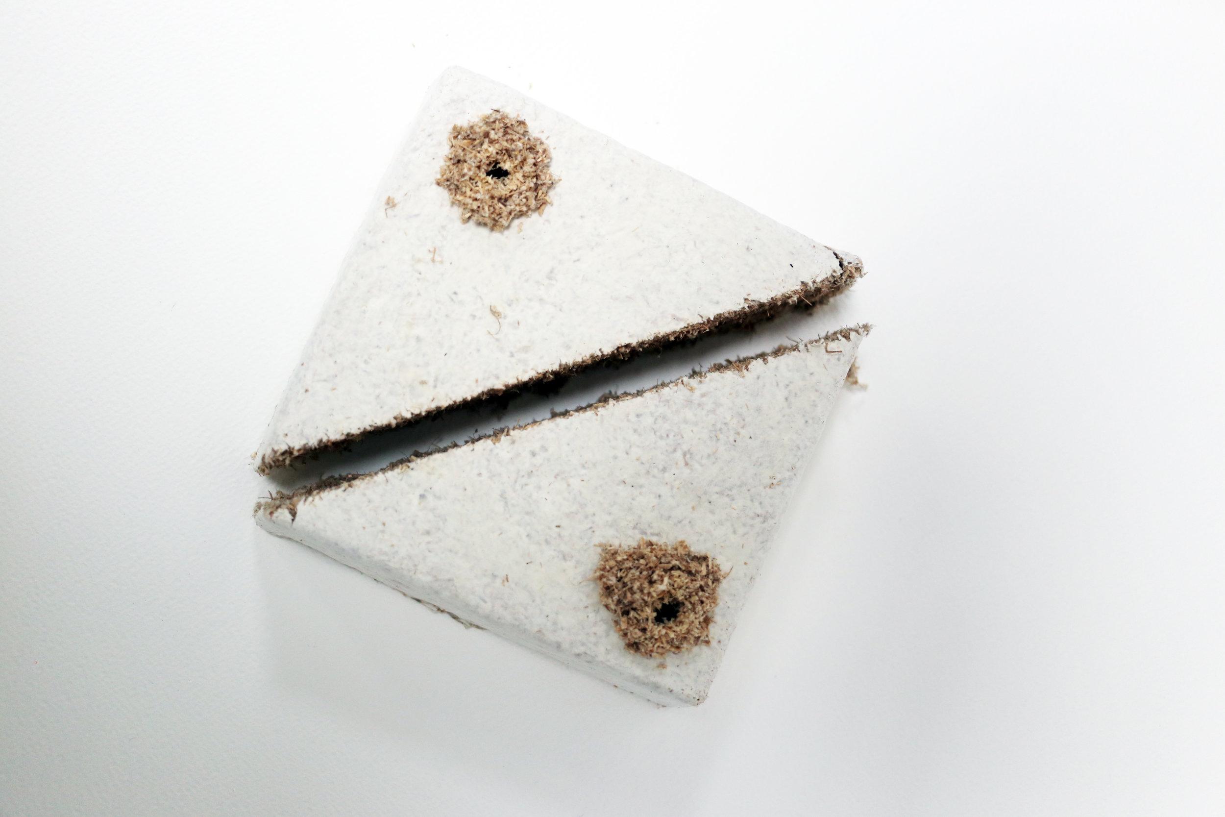 Mycelium Process