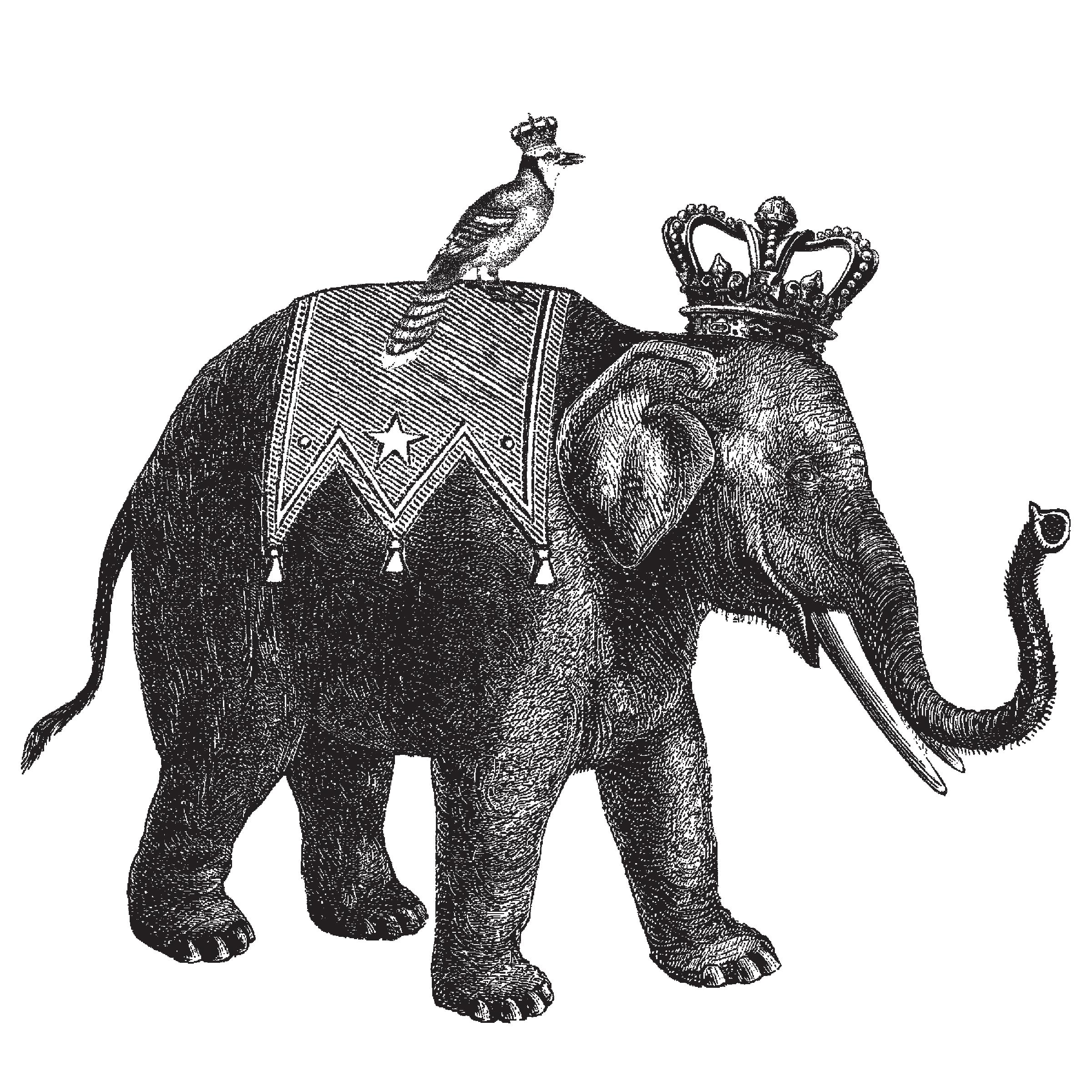 Jan_Elephant_Black-2-transparent.png