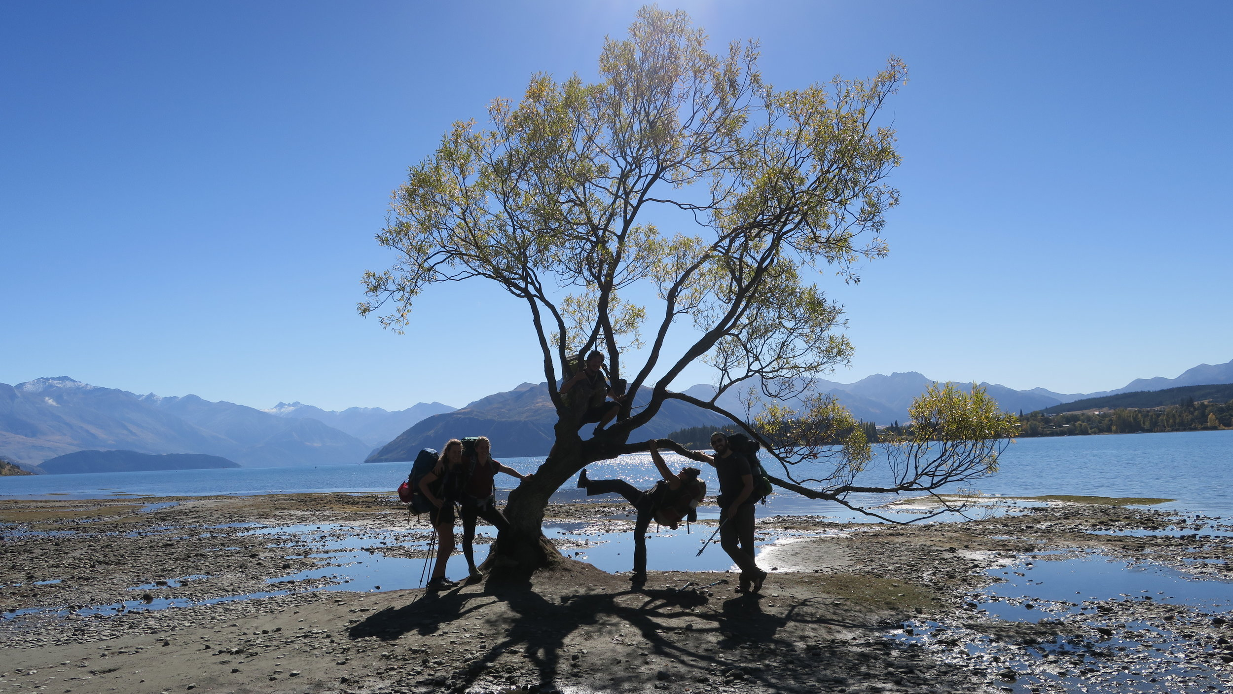 Wanaka tree infested with party animals