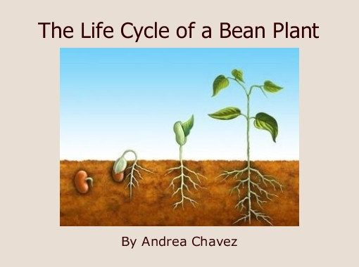 lifecyclebeanplant