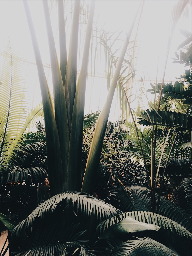 TROPICAL-FOLIAGE-LOOLAADESIGNS