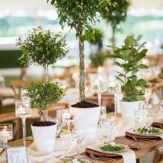 topiary bar mitzvah