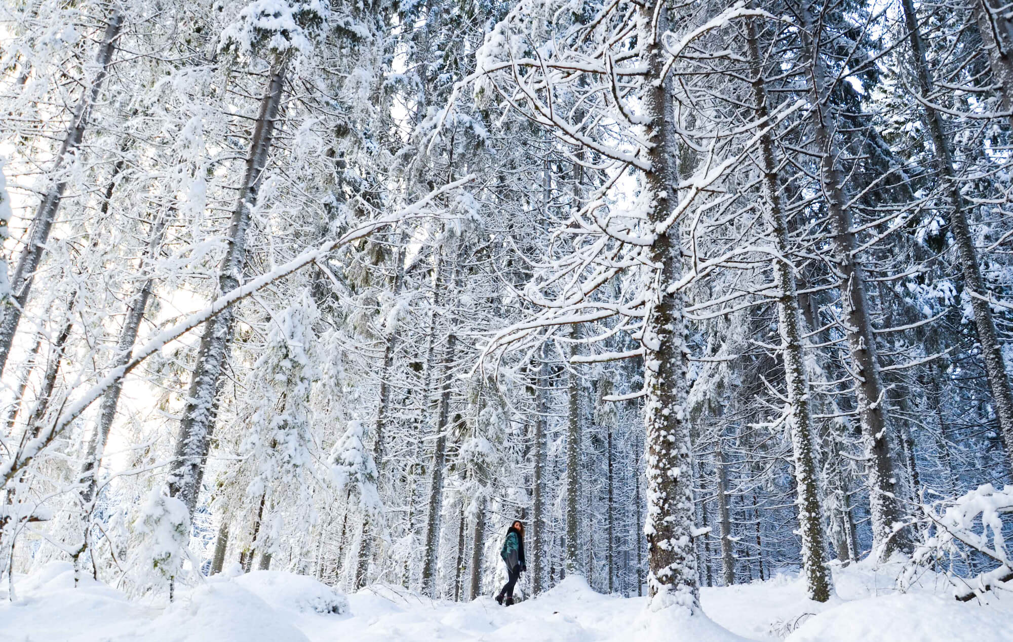 An Introduction to Nordic Cuisine