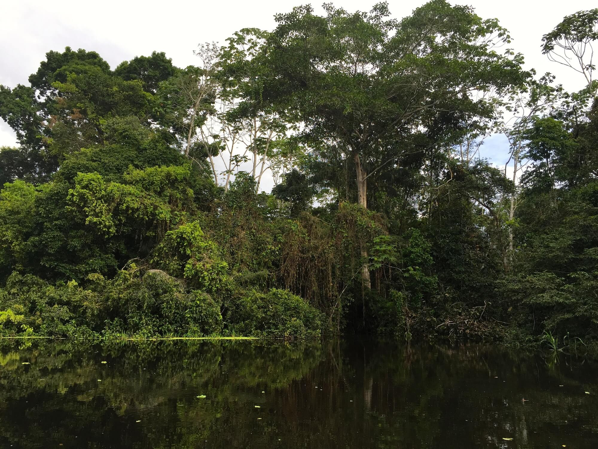 The Amazon jungle is filled with superfoods and other plants with medicinal properties