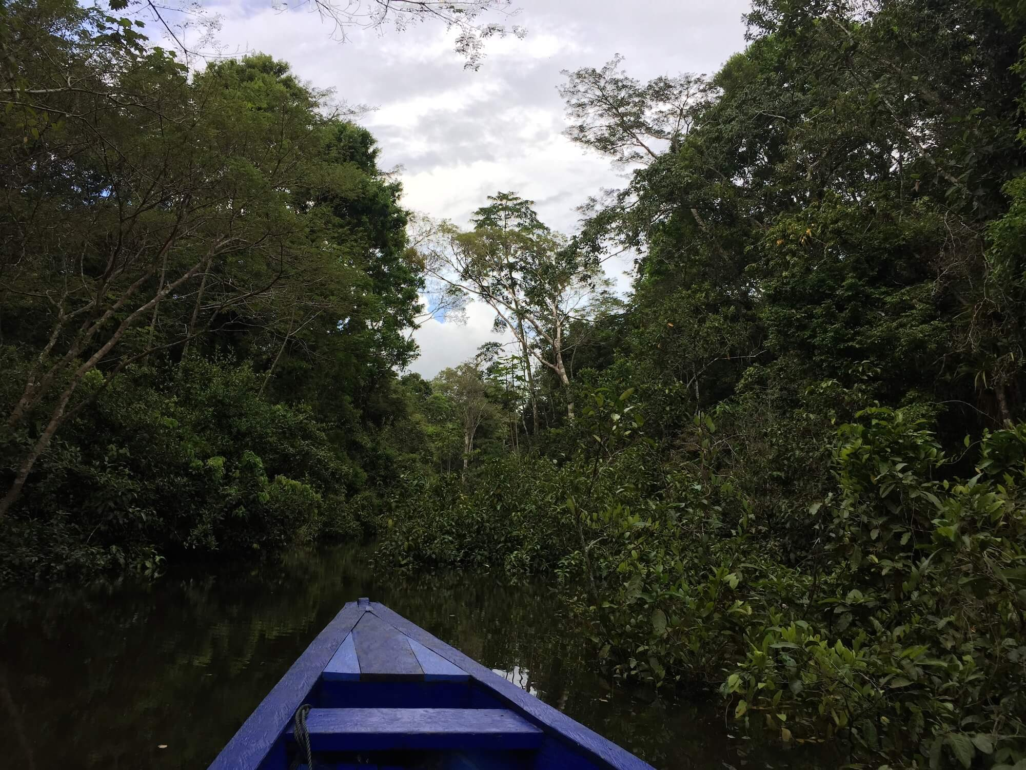 Exploring the Amazon jungle for medicinal plants and healthy superfood