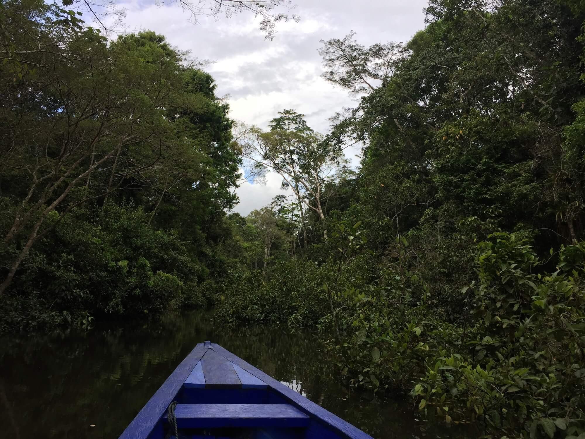 Amazon-tributary-river-Peruvian-jungle.JPG