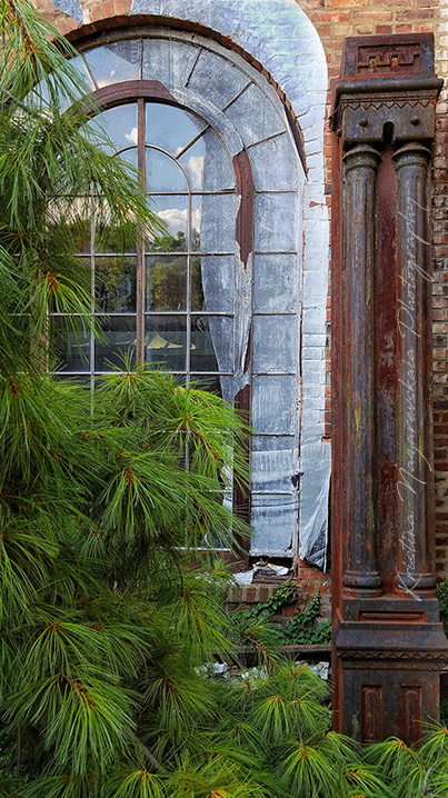 NEW Kristina Nazarevskaia Photography, Elizabeth Street Garden 2019 Window c.jpg