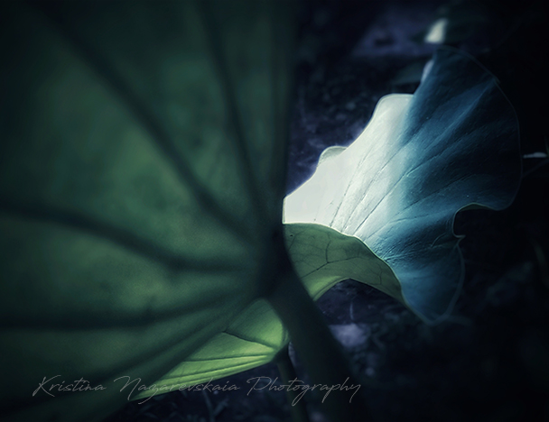 NEW Kristina Nazarevskaia Photography, Elizabeth Street Garden 2019 Leaves 2 c.jpg