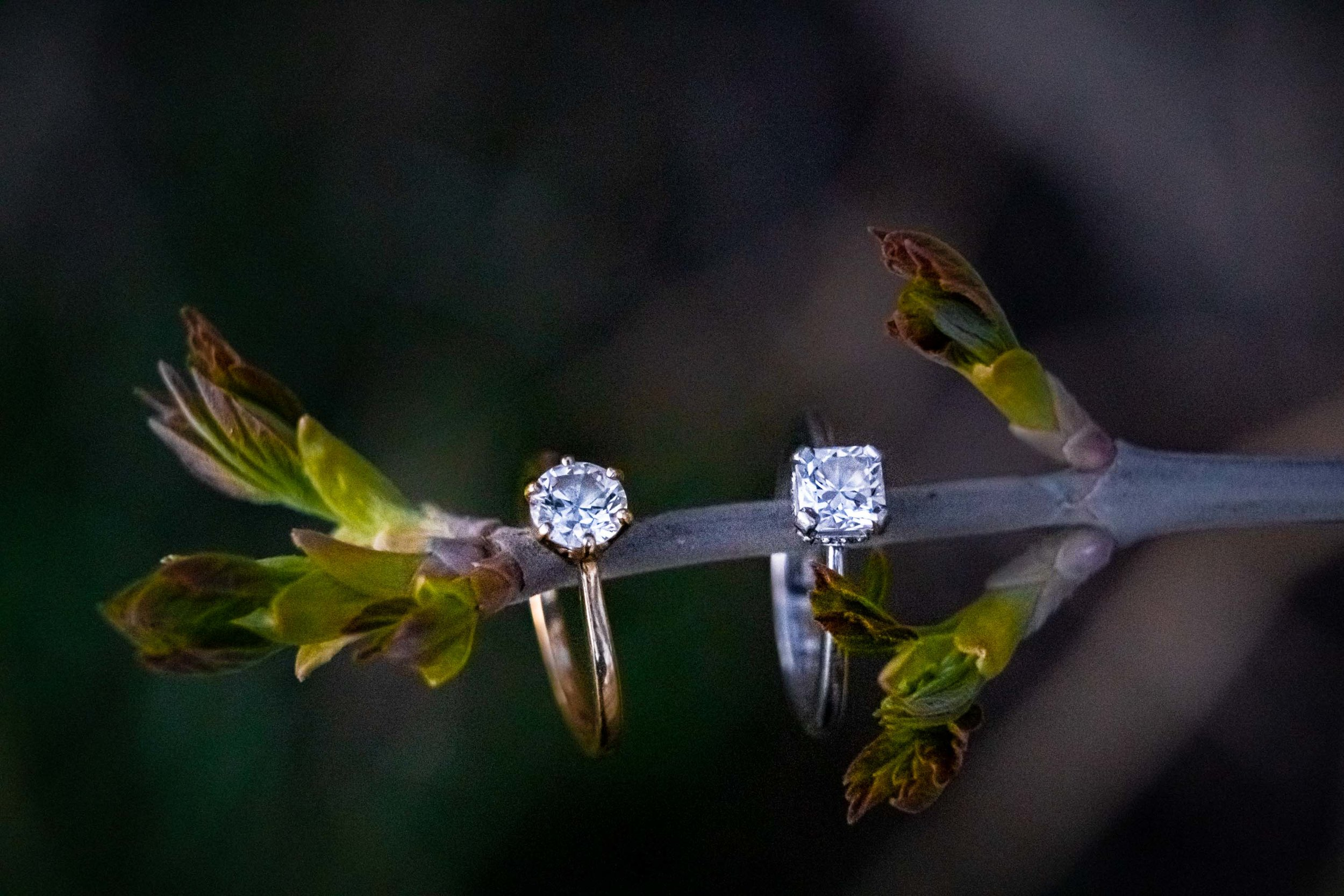Poudre_Canyon_Engagement_Session-45.jpg