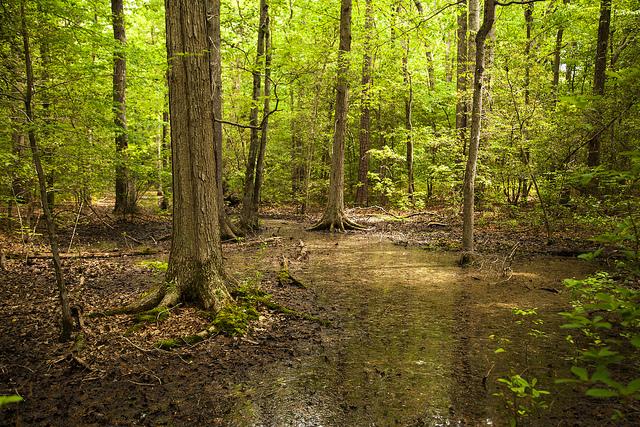 Forest by Chesapeake Bay Program