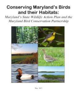 Conserving Marylands Birds and their Habitats cover.jpg