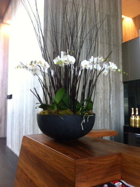 Large Potted Orchid Arrangement copy.JPG
