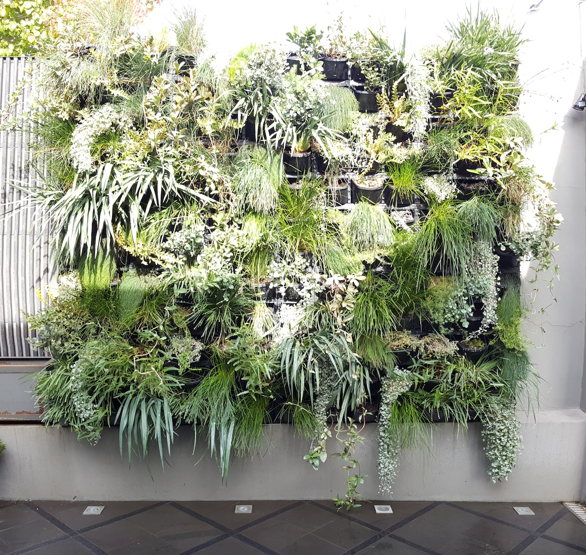 Native plantings in vertical garden for residential client in Melbourne.