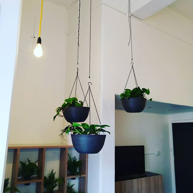 Getting some hang time with a little bunch of hanging pots #philodendrons #epipremnumaureum #indoorplants #greeninfrastructure #hangingplants #hangingbaskets #hangingpots #melbourne #northmelbourne