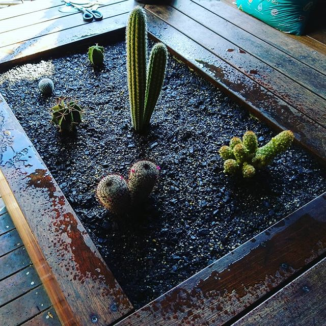 Cacti beds soft install at a rooftop bar #cactus #cacti #rooftopgarden #greenroof #greeninfrastructure #greenwall #landscapefeatures #landscapedesign #landscapemaintenance #landscaping