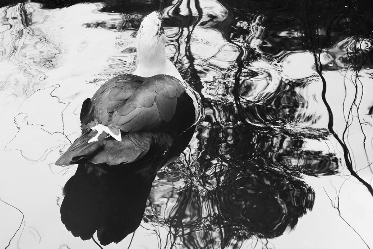 Pond+of+Tears2.jpg