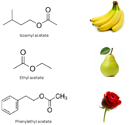 Photo: Different Esters and their associated scents