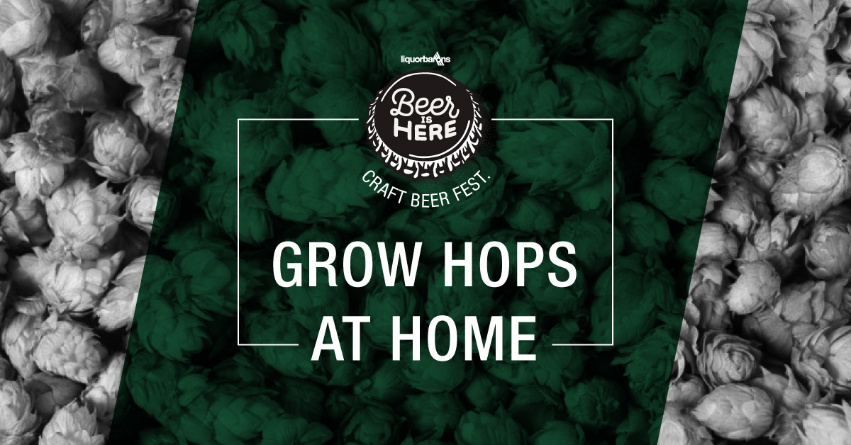 Craft-Beer-Fest-Week-2-Grow-Hops.jpg
