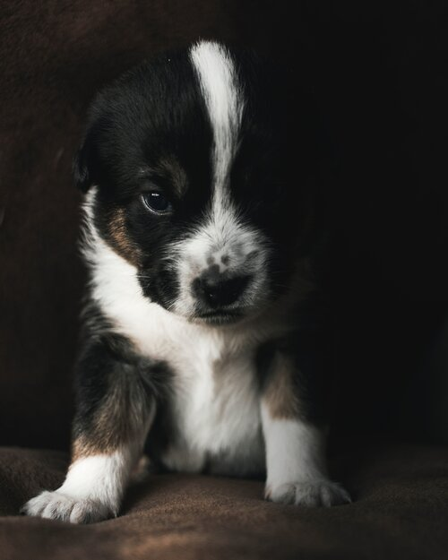 You know how you paper train a puppy? You can gently train your brain to avoid disempowering thoughts that don't serve you.