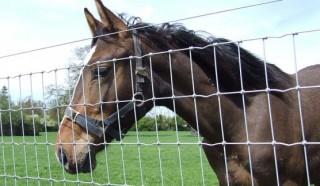 horse-fencing.jpg