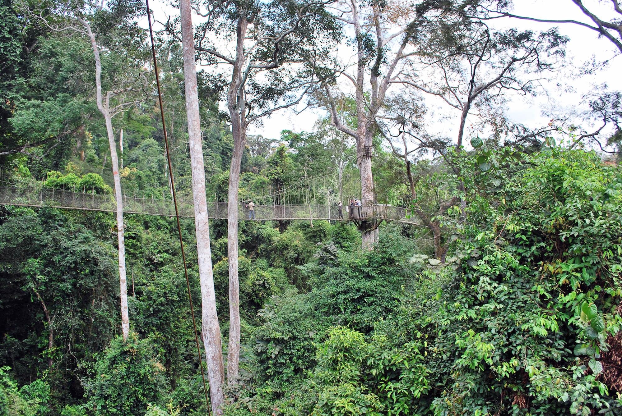 Ghana, Kakum Park 3- copyright goldcoast.be.jpg