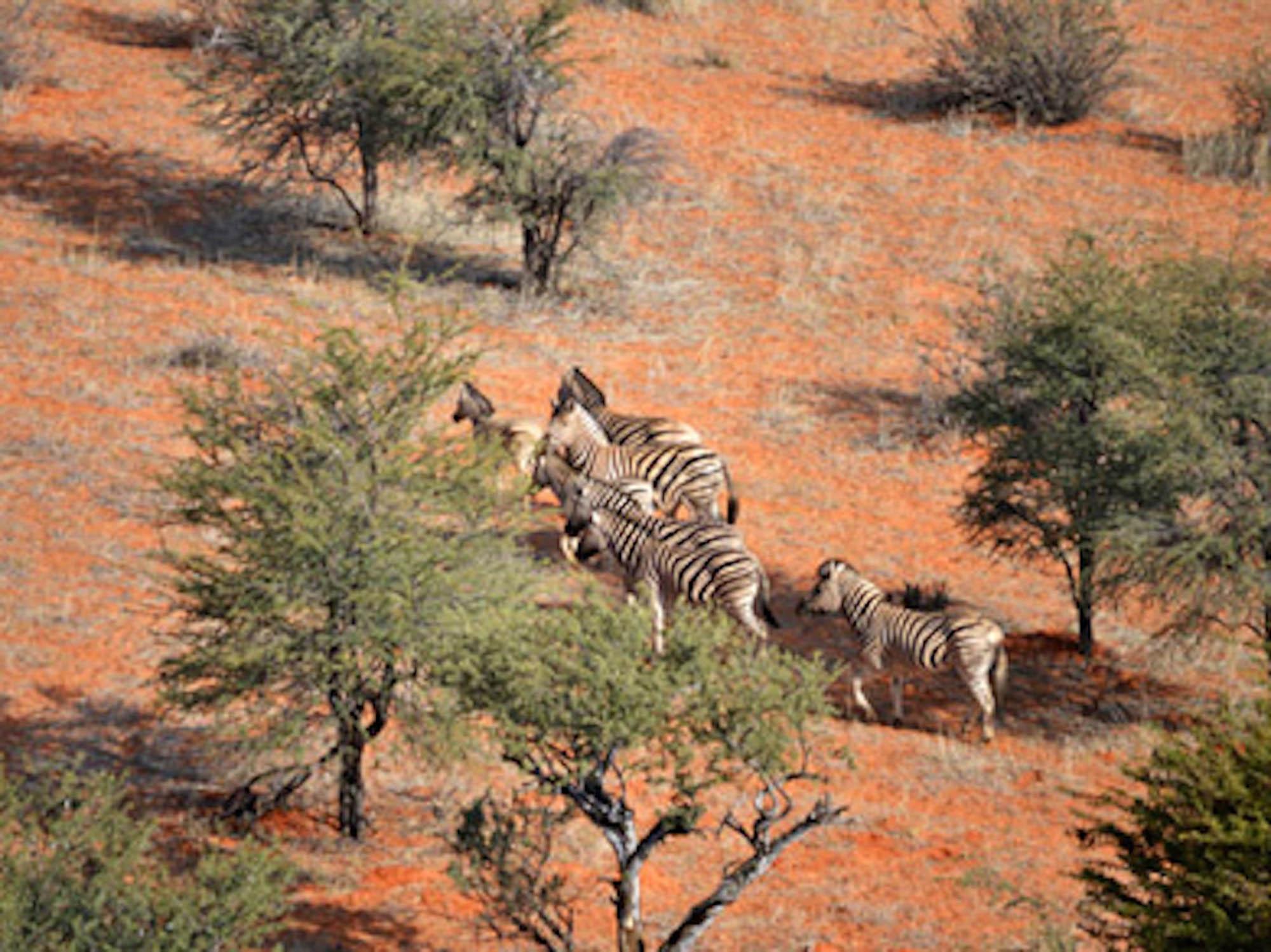 Namibie zebres.jpg