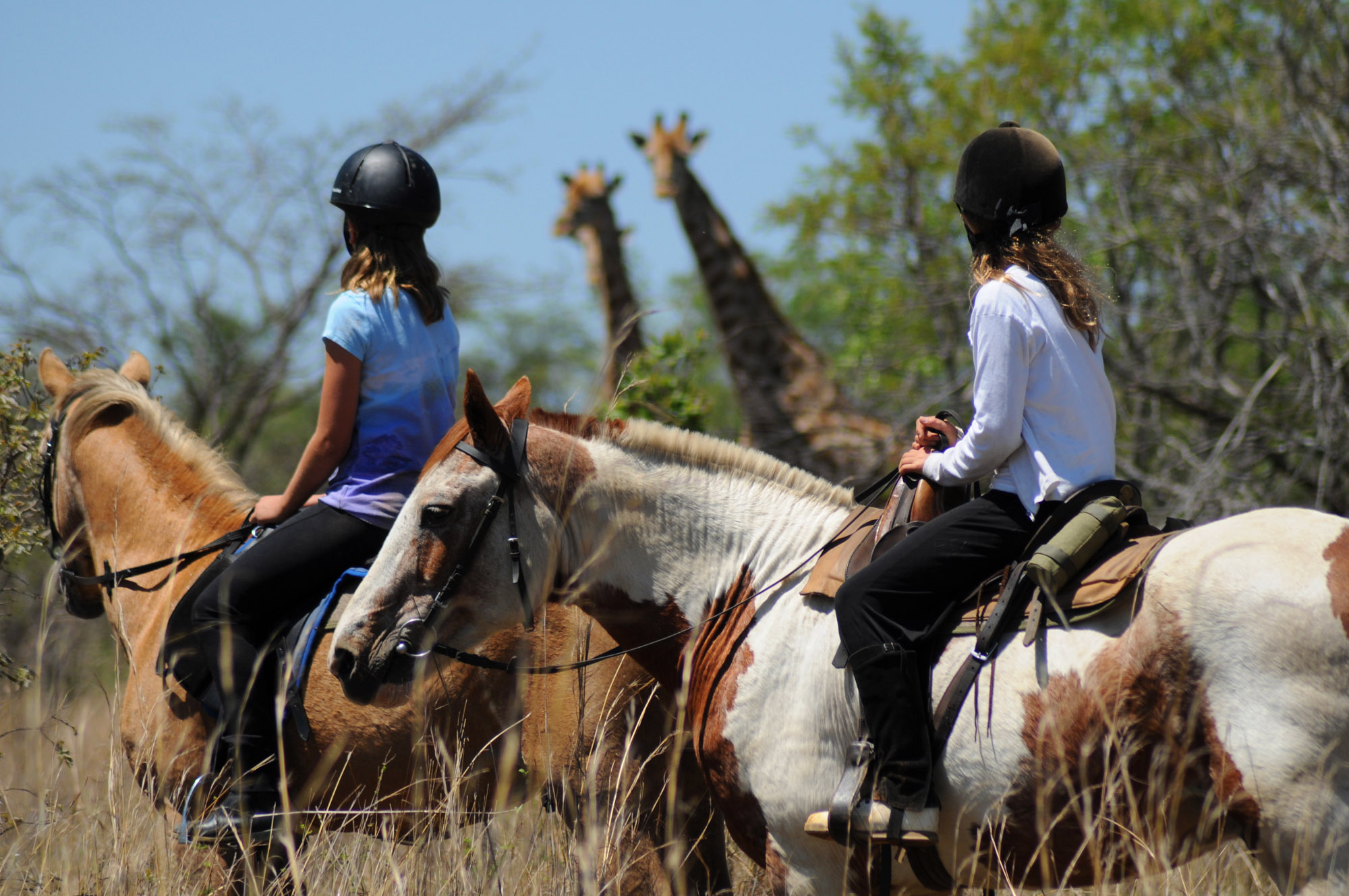 cheval-daventure-ma-ferme-africaine (5).jpg