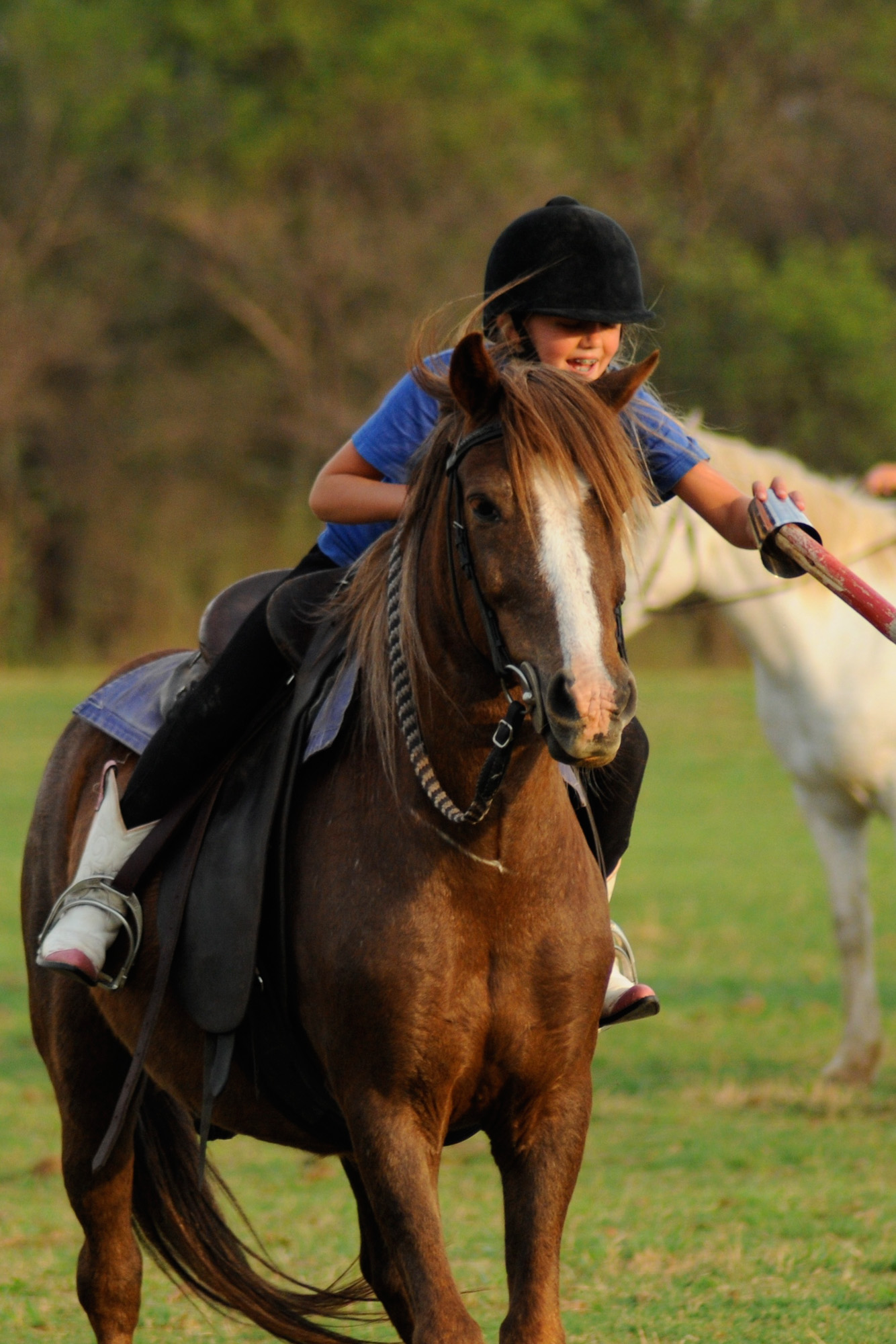 cheval-daventure-ma-ferme-africaine (4).jpg