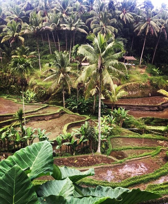 Rizières de Bali...s'y promener au petit matin... #bali #asie #voyager #voyageenfamille #ubud #goodtimes #belgianblogger #travelgram #enfamille #vert #balilife #baliindonesia #belgianblogger #valisesenfamille #travel