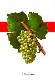 LA folle blanche  - ne représente qu'un très faible pourcentage des surfaces - 1 à 2%, la vigne est très sensible a la maladie et sa grappe particulièrement dense favorise la dispersion des MALADIES. par contre ses ARÔMES sont d'une EXTRÊME finesse de CARACTÈRE assez AÉRIEN floral et VÉGÉTAL. rare et TRÈS recherché par les amateurs avertis. CÉPAGE emblématique de L'ARMAGNAC avant la crise du PHYLLOXÉRA qui le fit presque DISPARAÎTRE en 1893.