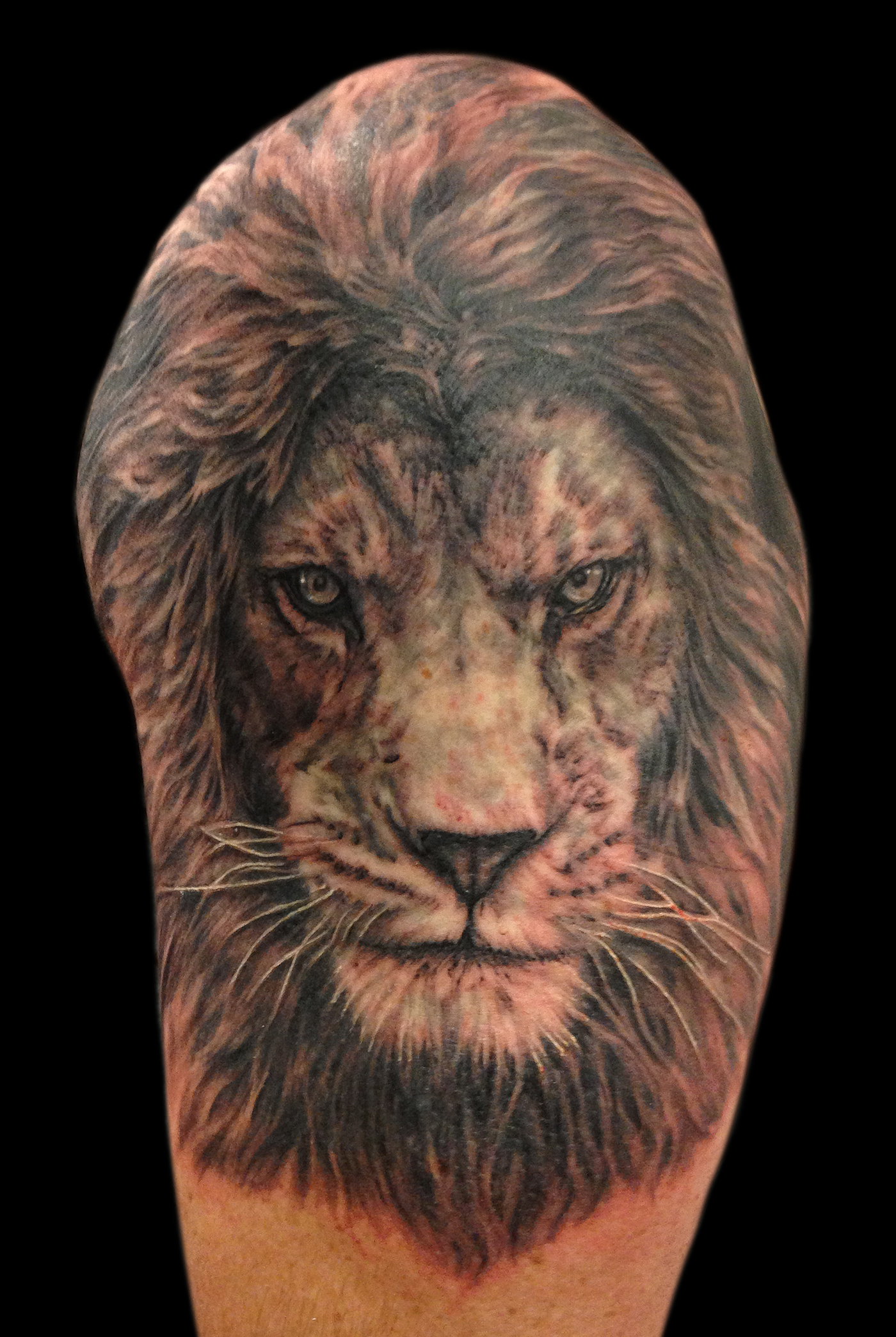 Black and Grey Realistic Lion Portrait Tattoo