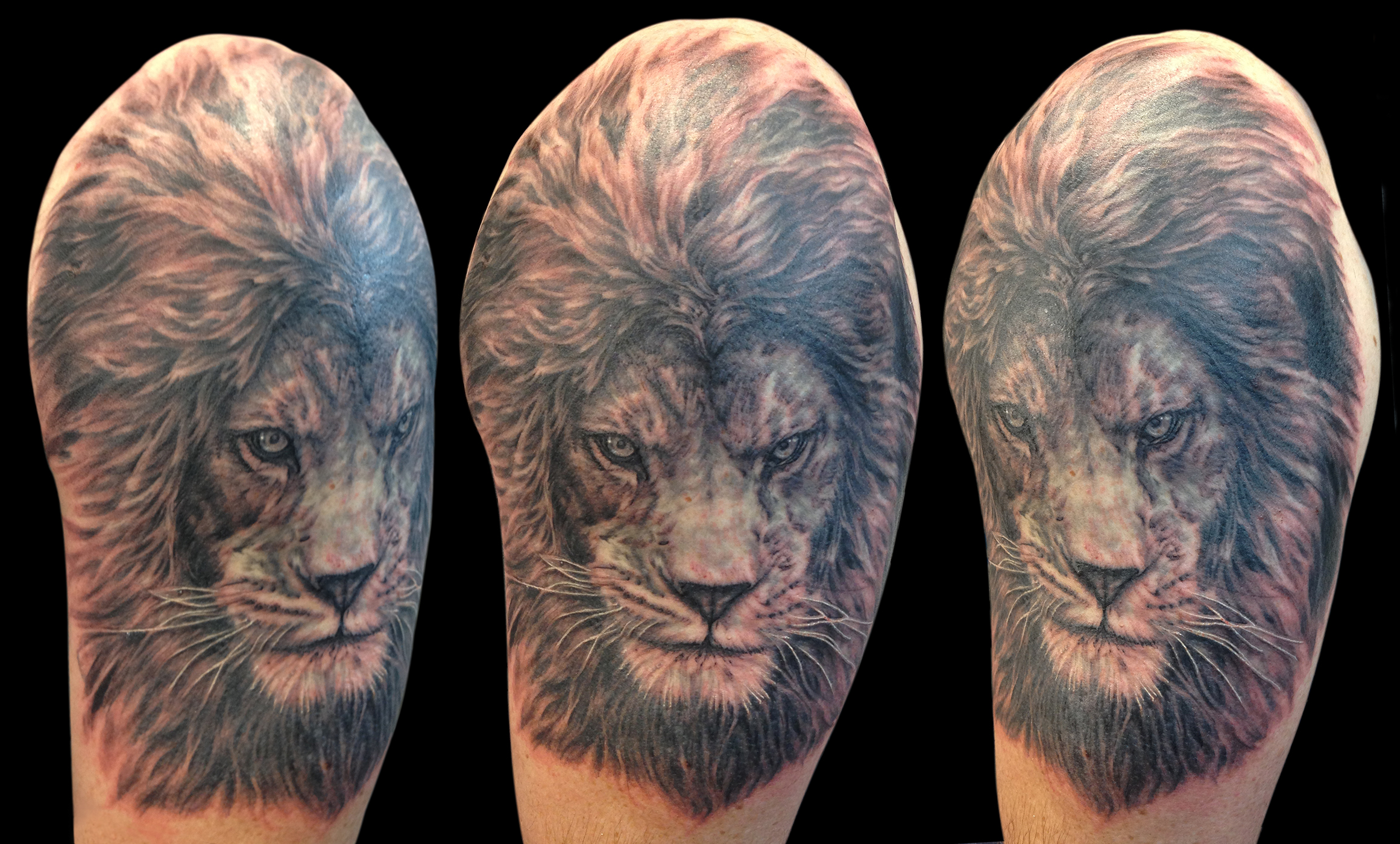 Black and Grey Realistic Lion Portrait Tattoo, multi angle from sides and top