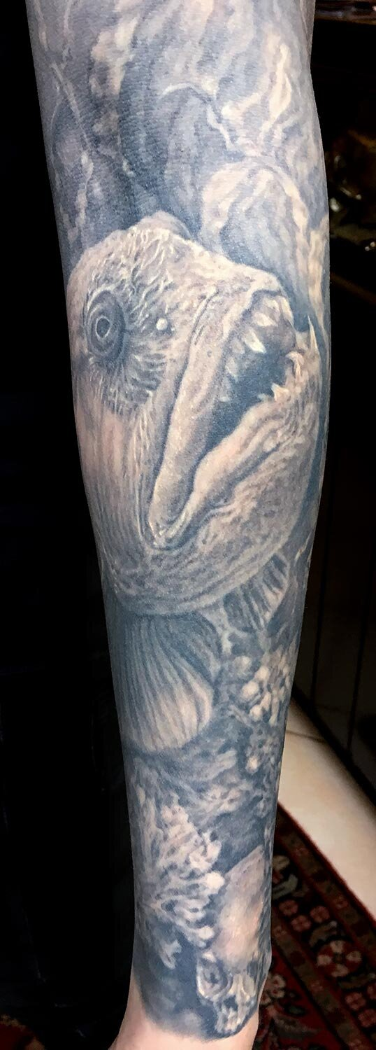 Detail- Black and Grey Wolf Fish (Steinbit) with Norwegian Boathouse Sleeve Tattoo, (healed)