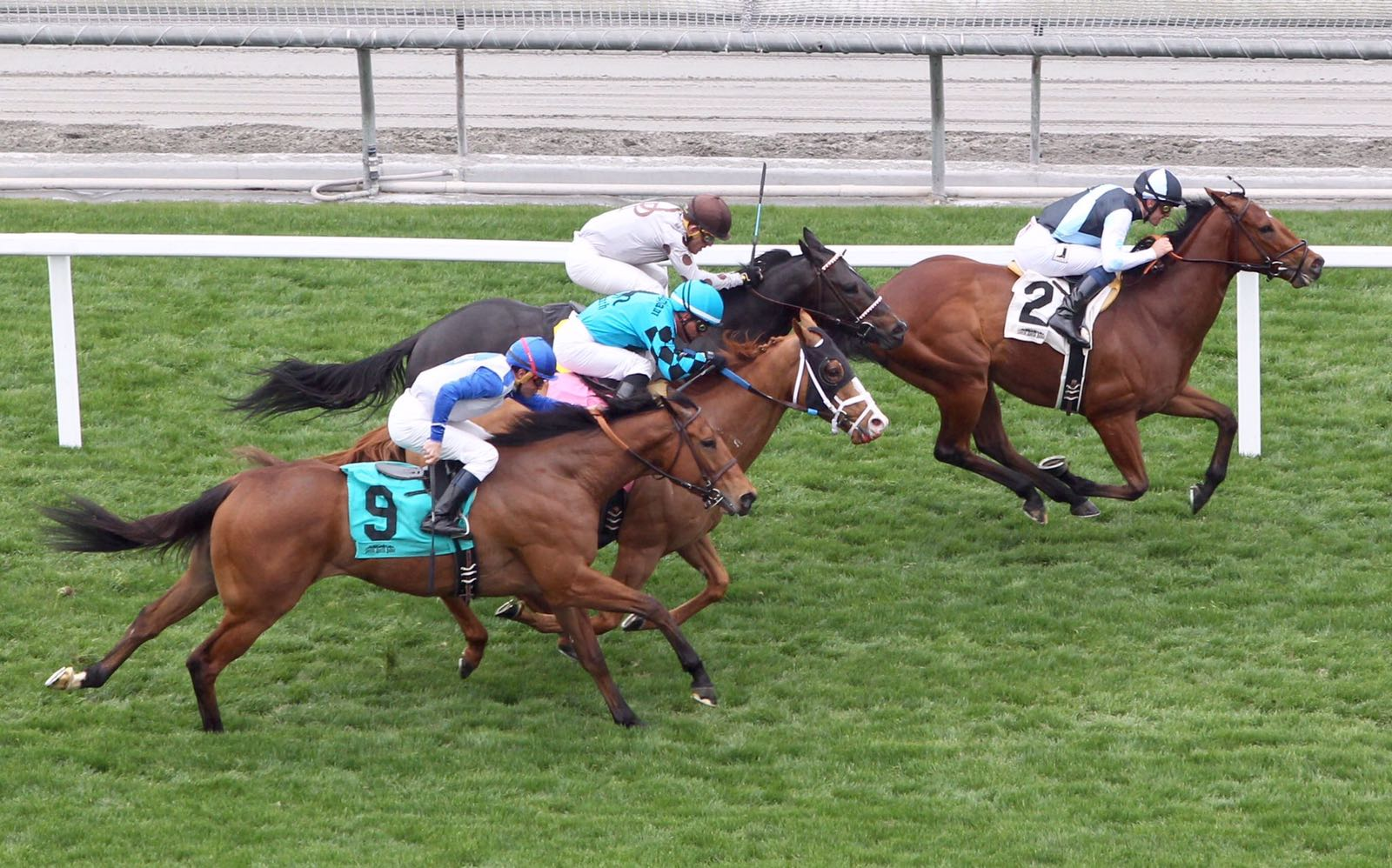 Champagne Charley   A homebred of ours out of mare Age Of Refinement this son of Myboycharlie broke his duck in America on 5th March 2017 in an allowance race at Santa Anita. A lot more to come from him.