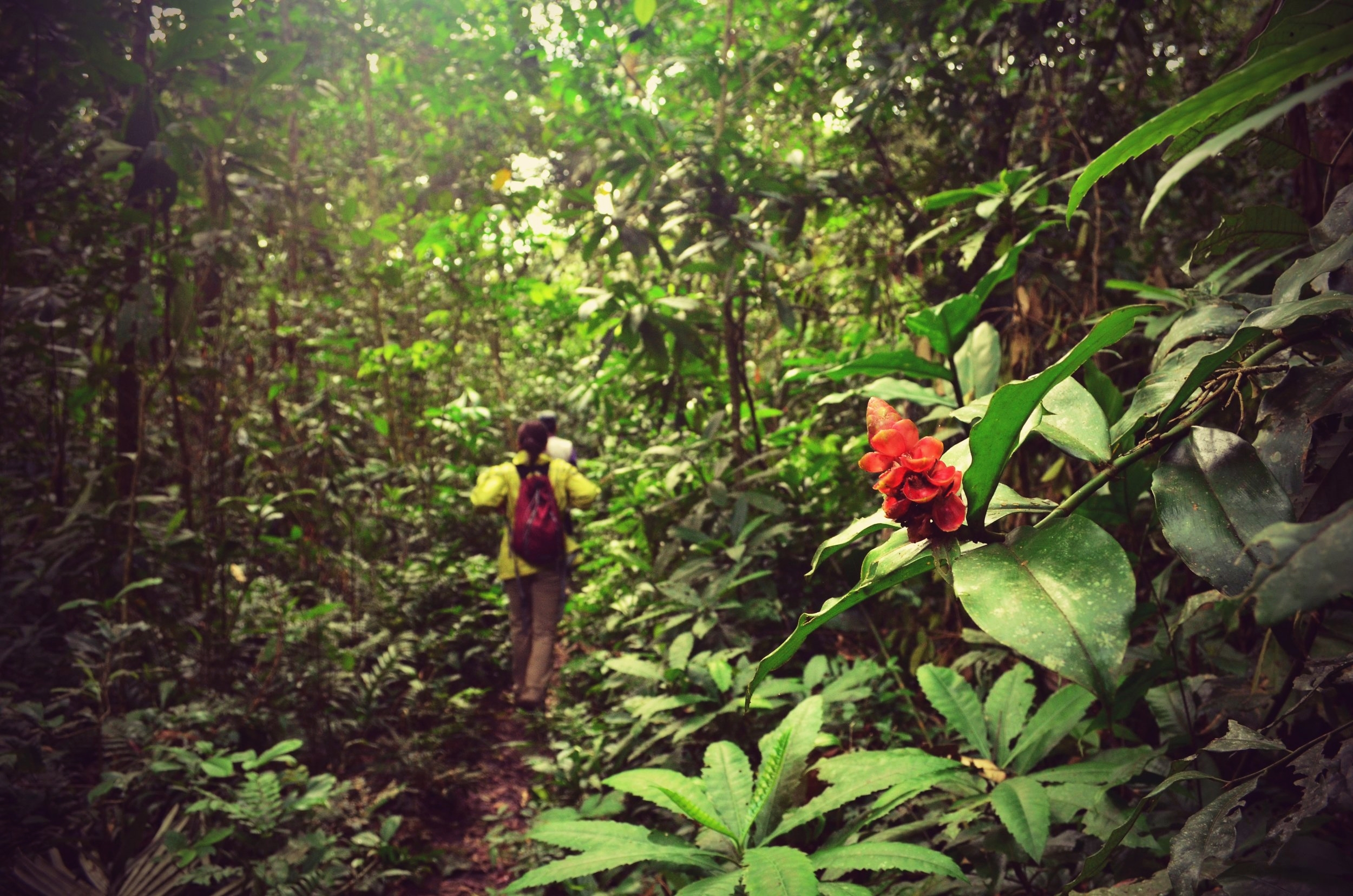 Wild and colorful plants and fruits decorate the amazon's dense green vegetation.