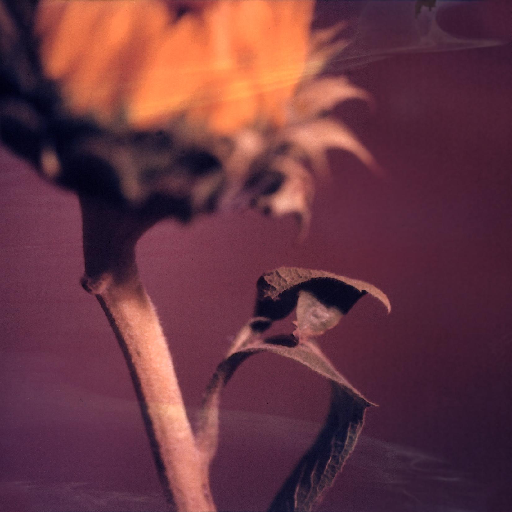 sunflower3work.jpg