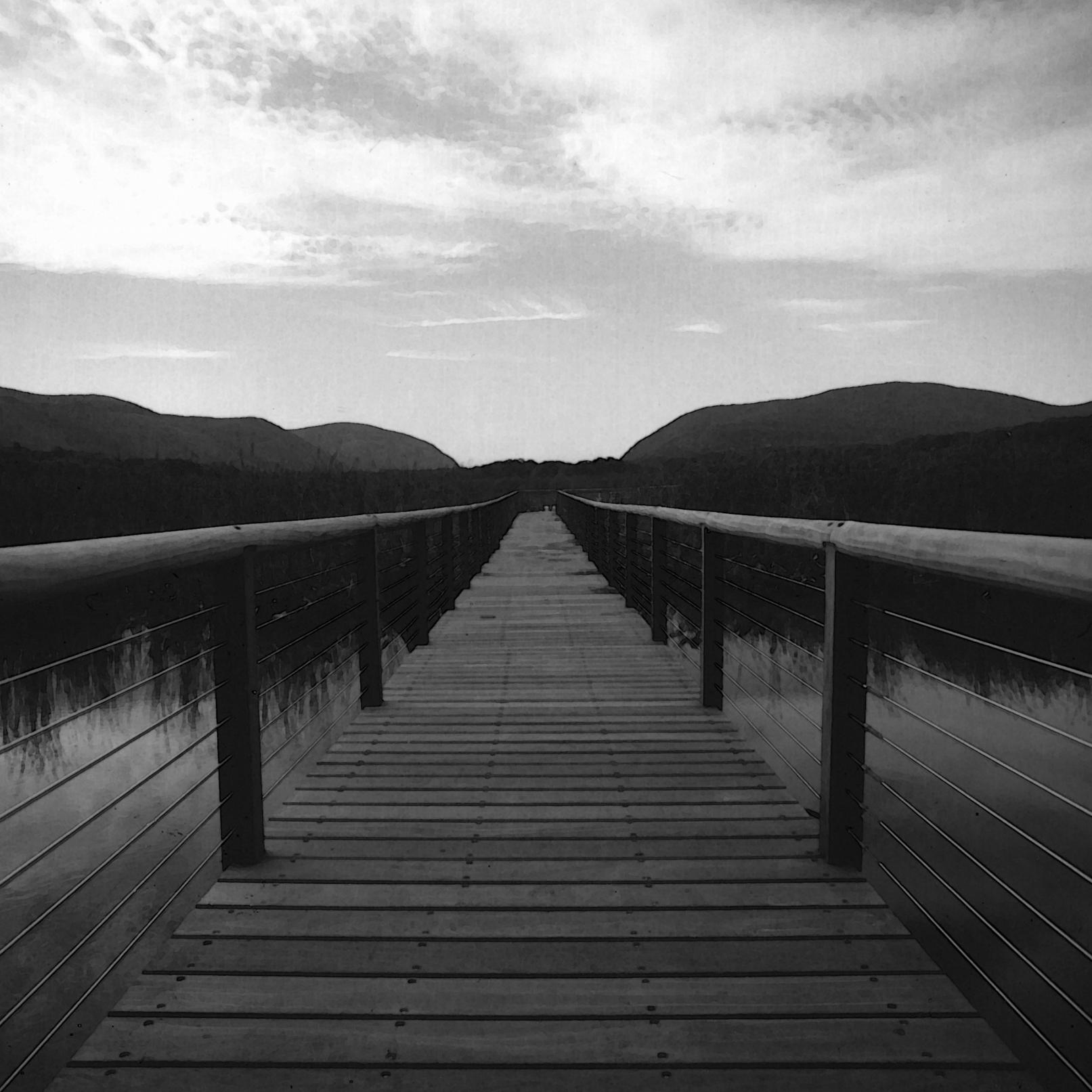black  white marsh.jpg