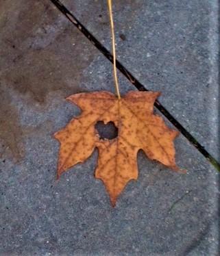 Heart in Leaf .jpg