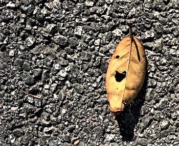Heart in Leaf 2.jpg