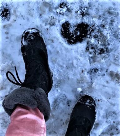 Heart in Snow.jpg