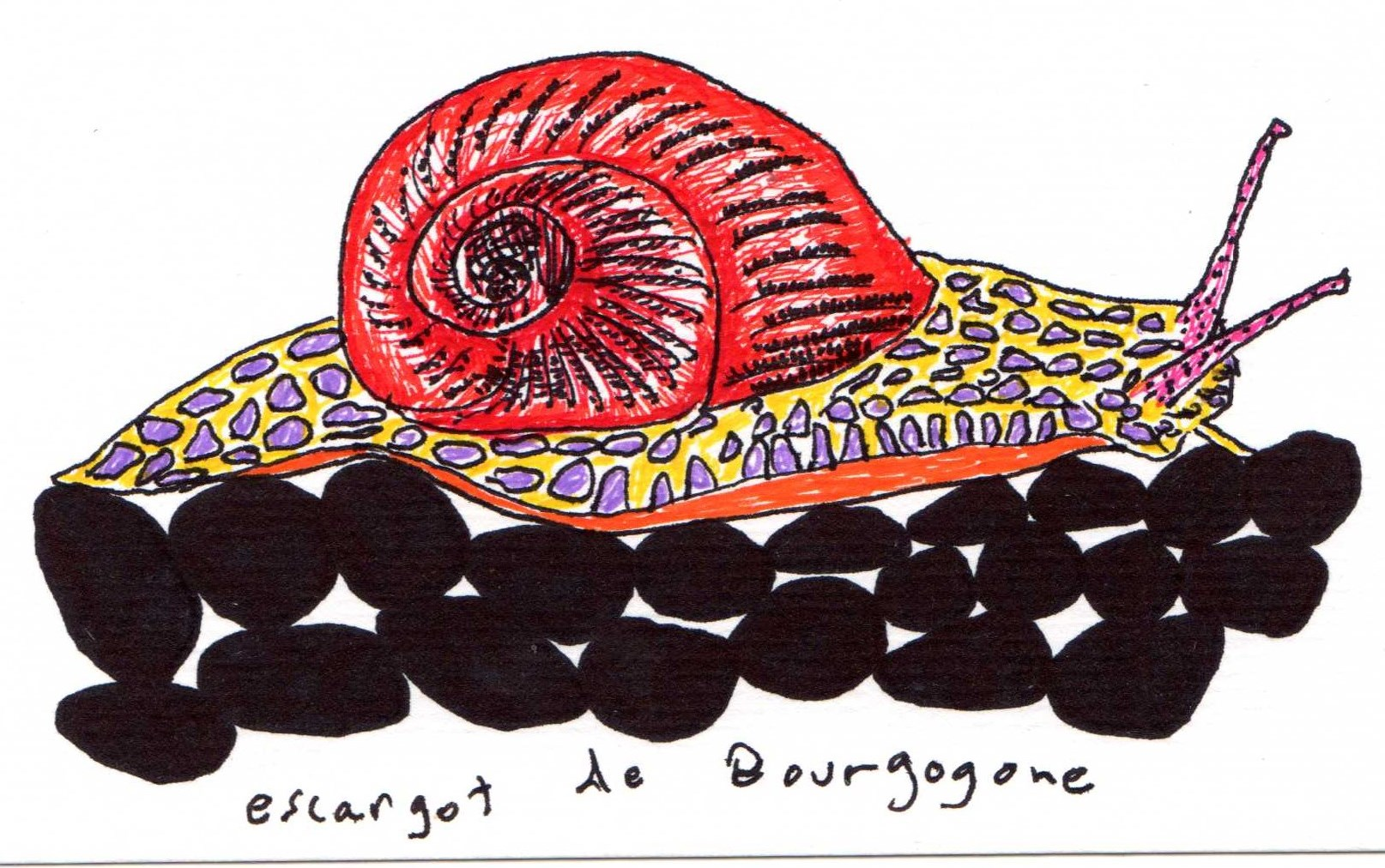 snails of Aquitaine.jpg
