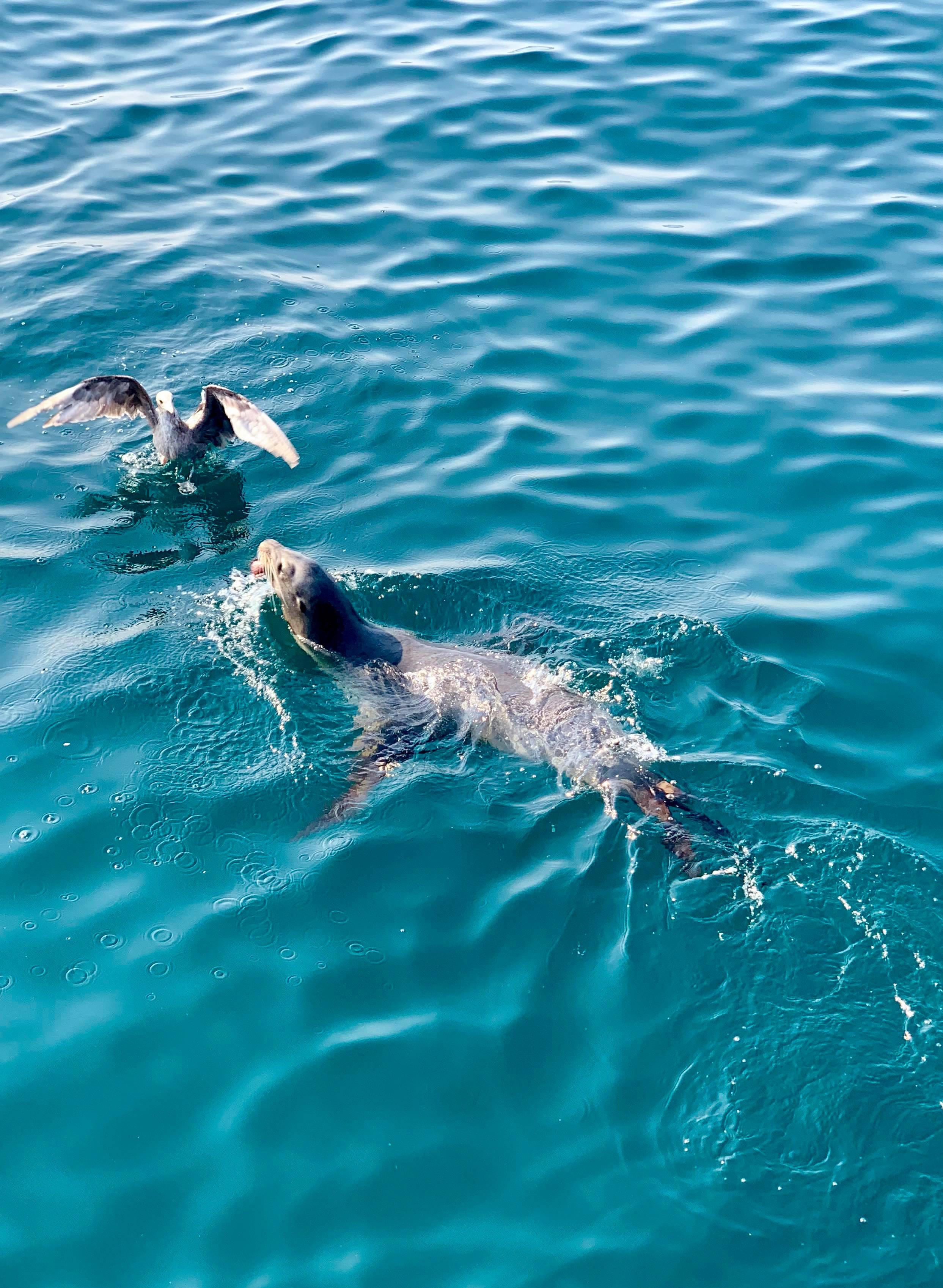 - Seals!