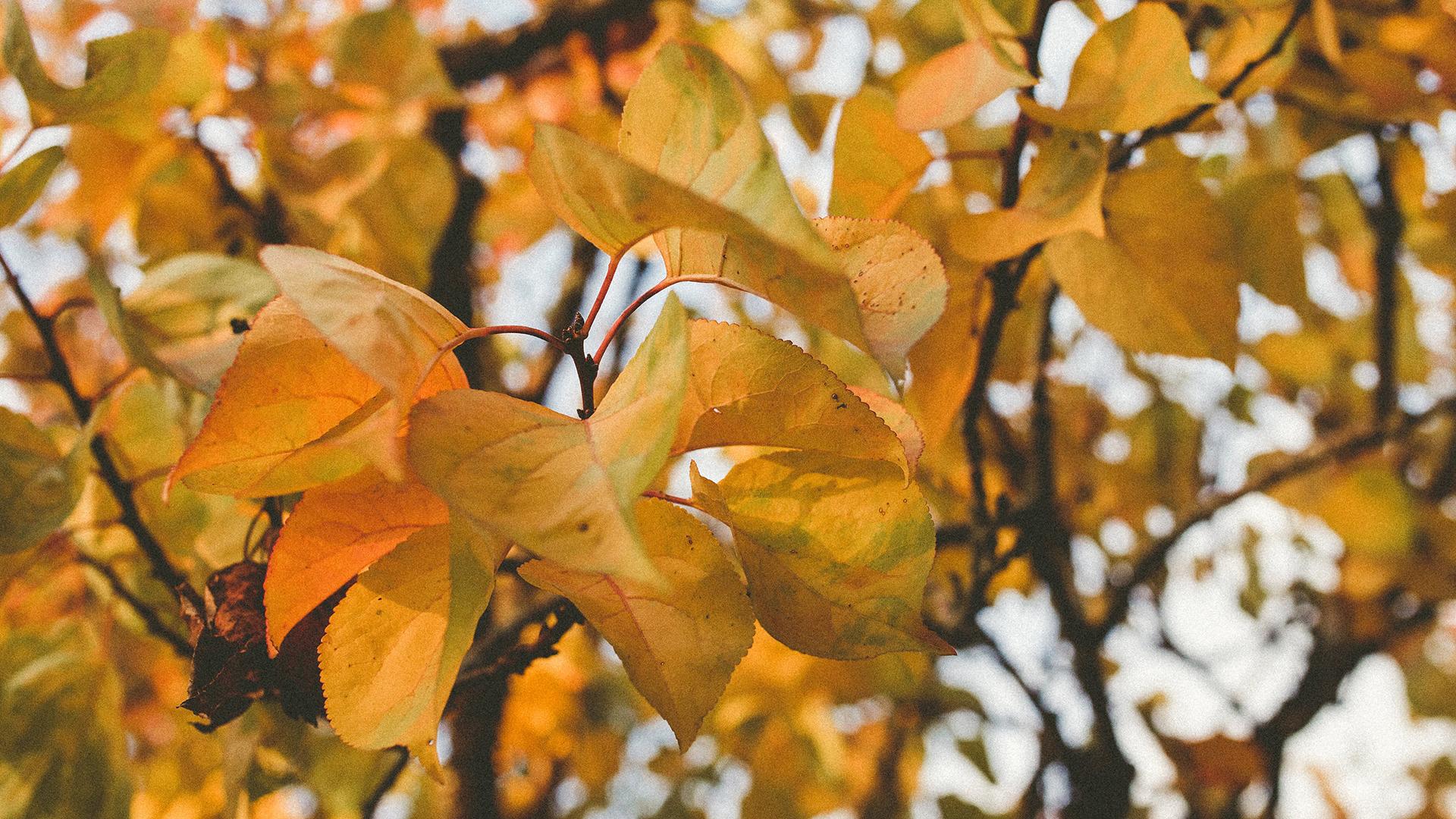 Autumn Equinox slow rest retrea.jpg
