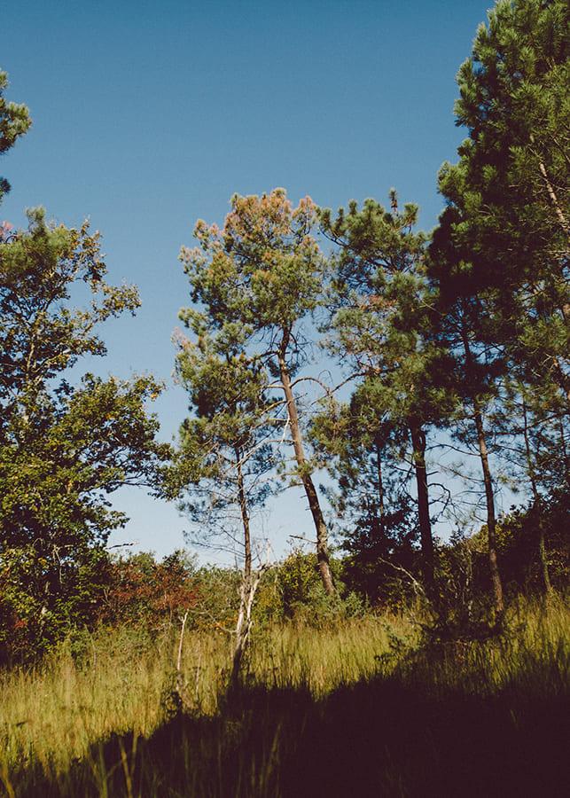 little-french-retreat-yoga-ayurvedic-landscape-gascony.jpg