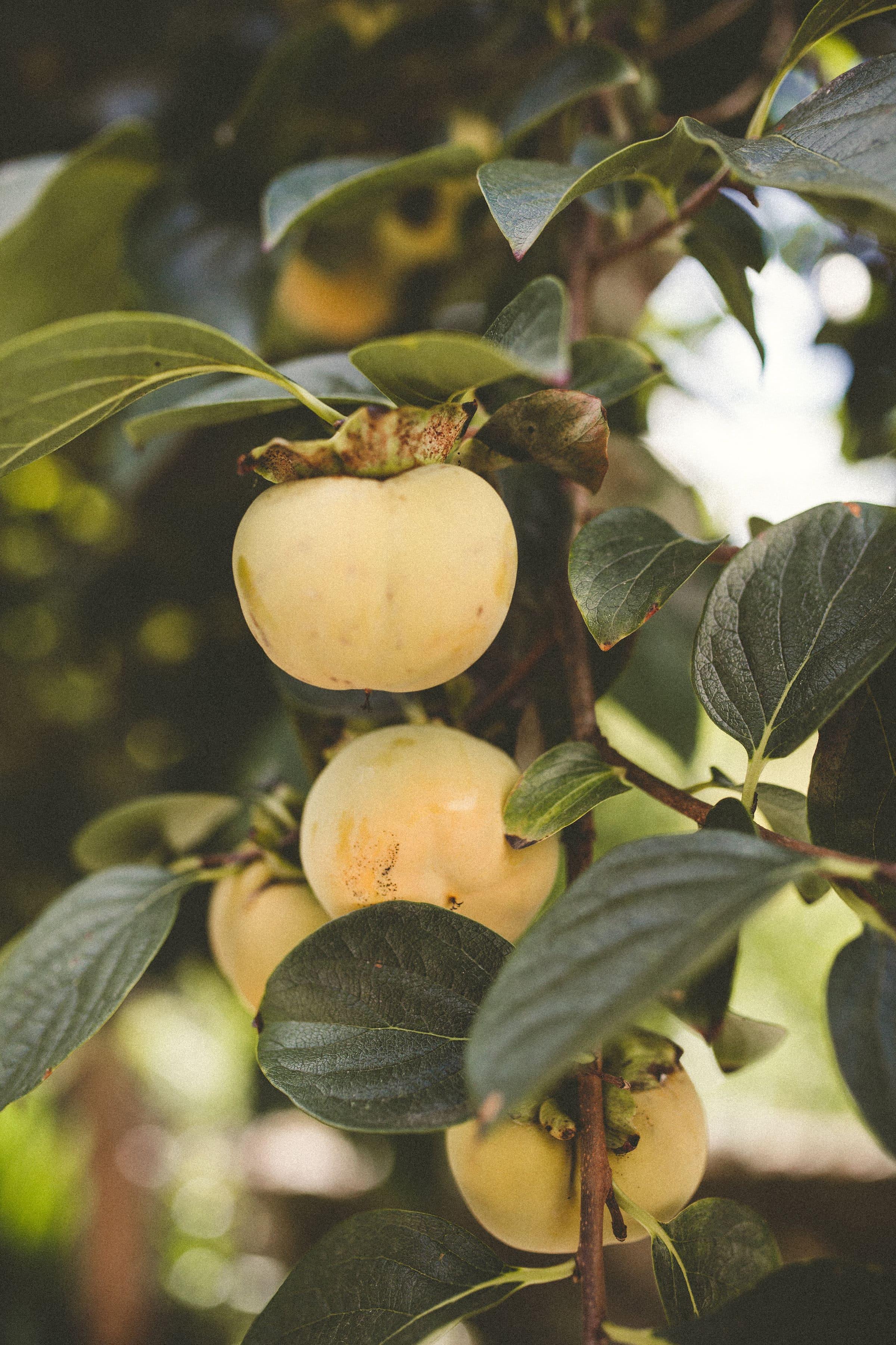 vegetables-fruits-nature-healthy-food-garden-local-retreat-france-ayurveda-ayurvedic-food.jpg